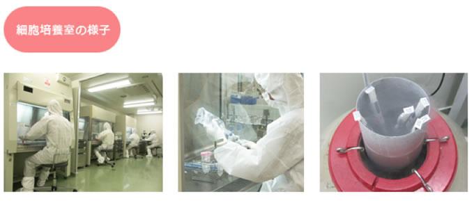 免疫細胞療法